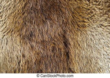 Beaver Pelt - A beaver pelt