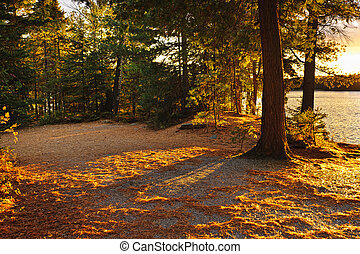 Autumn trees near lake