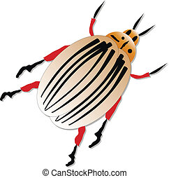 Colorado potato beetle, isolated. Vector illustration