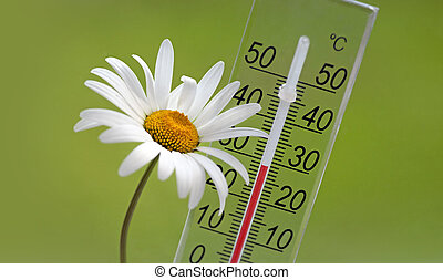 Summer temperature - Thermometer and white daisy on green...
