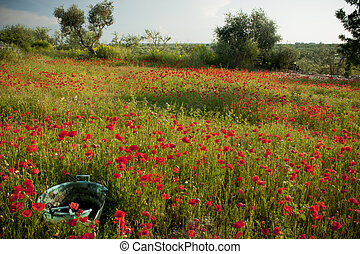 Poppies Field with Bowl