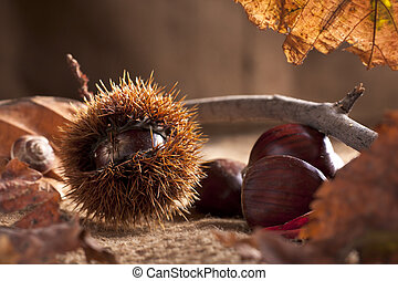 Chestnuts with Bur