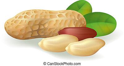 Peanuts. - Peanut fruit and leaves. Vector illustration on...