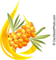 Sea buckthorn oil. Stylized drop of oil and a branch with berries.