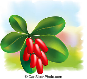 Fruits and leaves of barberry on a colored background.