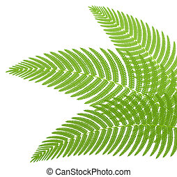 The green leaves of a fern. Vector illustration.