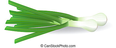Fresh green onions. Vector illustration.