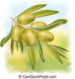 A branch of green olives. Vector illustration.