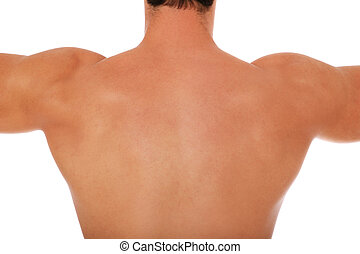 Muscled back of a male person All on white background