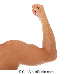 Heavily muscled arm. All on white background.