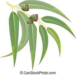 eucalipto, rama, blanco, Plano de fondo, vector,...
