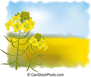 Mustard flowers with Field. Vector illustration.
