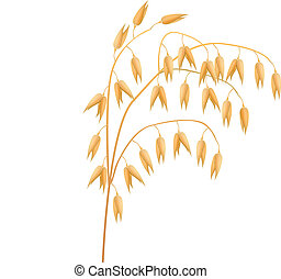 Ear of oats on a white background Vector illustration