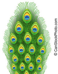 Peacock feathers. Vector illustration.