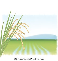 Rice field and a branch of ripe rice. Vector illustration.