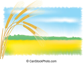 Rye ears and field. Vector illustration.