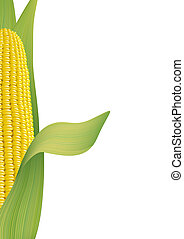 Ripe corn. Fragment. Vector illustration on white...