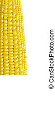 Ripe corn. Fragment. Vector illustration macro.