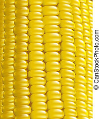 Ripe corn Fragment Vector illustration macro