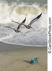 Pelican Beach - Two pelicans fly in formation with surf and...