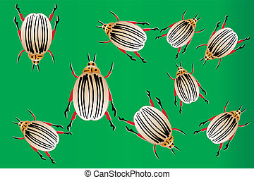 The Colorado potato beetles