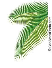Foglie, palma, albero, bianco, fondo, vettore, illustrazione
