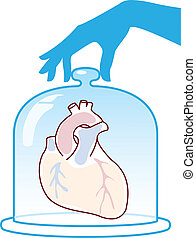 Heart is protected by a bell jar Vector illustration