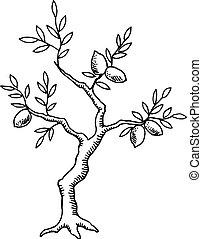 Old lemon tree - The old lemon tree. Vintage design.