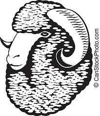Portrait of a merino sheep.