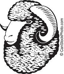 Portrait of a merino sheep. Black and white vector art.