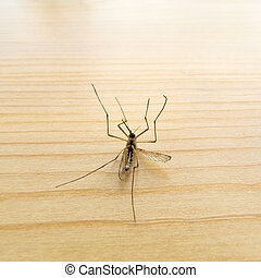Dead Mosquito on wooden board - Big dead mosquito laying on...