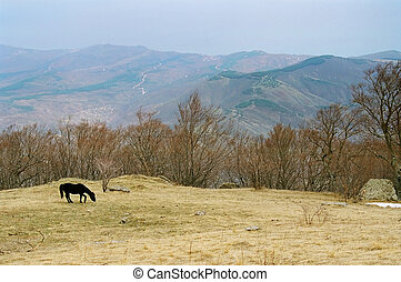 Lonely horse on the mountainside.