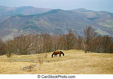 Two horses on the mountainside.