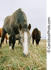 Horse chewing the grass.