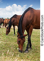 Herd of Horses on a field