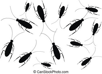 Black cockroaches isolated on white background - vector