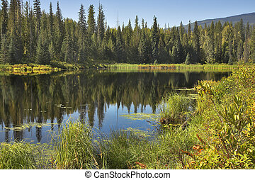 The turned yellow bushes. - The silent mountain lake...