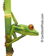 Red eyed treefrog on bamboo isolated