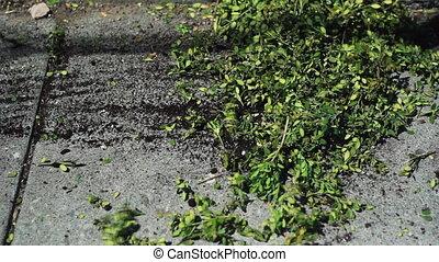 Yardwork. Raking. - Raking leaves and cuttings from a bush.