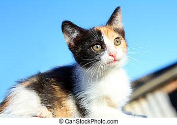 kitten portrait under blue sky