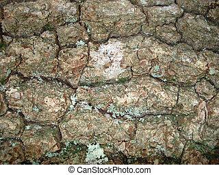 Tree bark and lichen