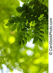 foliage - nature concept, selective focus on nearest leafs