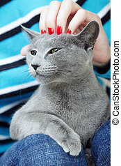 Human hand stroking cat. Close-up photo