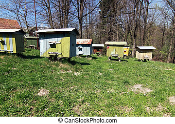 apiary with beehives in the forest