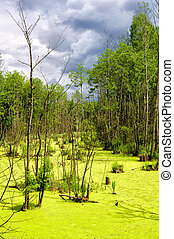 Colourful bog in a thicket.Nature composition.