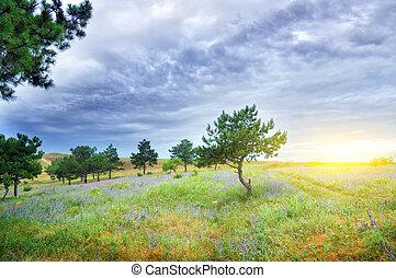 Pinos, verde, pradera, naturaleza, composición