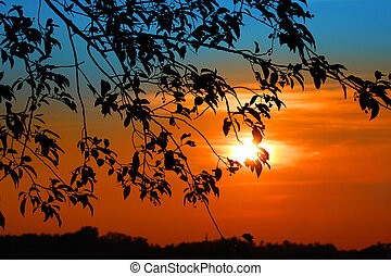 Sun set - Beautiful sun set and branch of tree