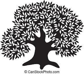 silhouette, vecchio, oliva, albero
