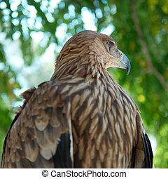 A hawk eagle sitting on the tree