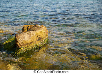 A big stone with green marine algae